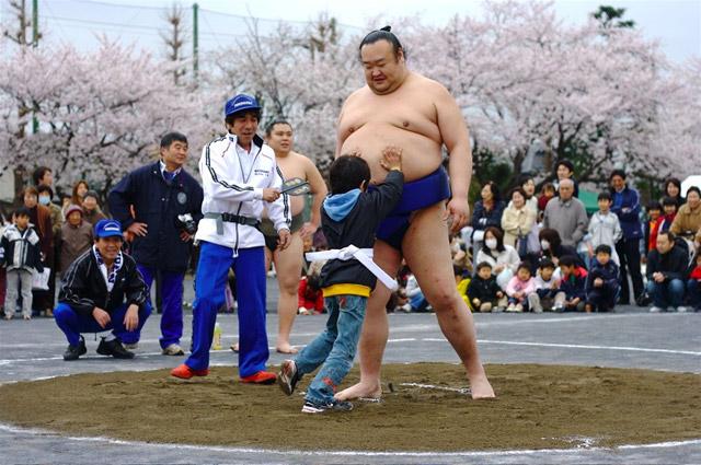 Сумо традиции Японии